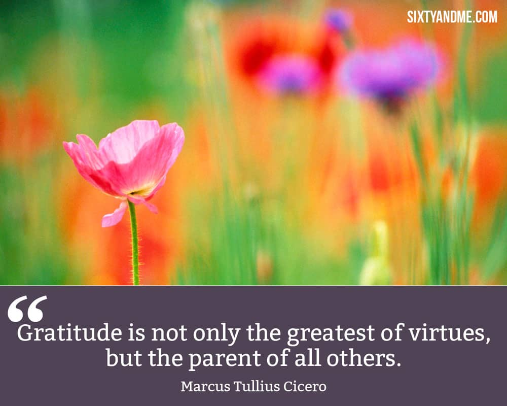 """Gratitude is not only the greatest of virtues, but the parent of all others."" - Marcus Tullius Cicero"