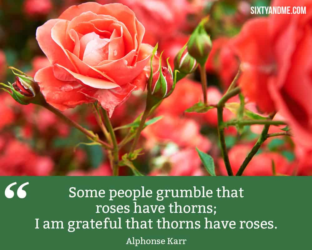 """Some people grumble that roses have thorns; I am grateful that thorns have roses."" - Alphonse Karr"