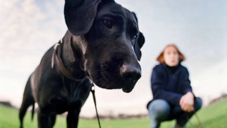Volunteering with Guide Dogs