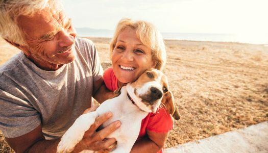 5 Essential Tips for Traveling with Pets