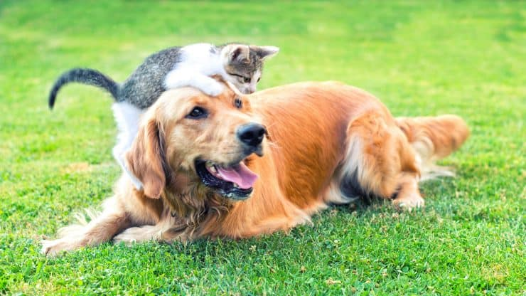 What's-the-Best-Pet-for-Seniors