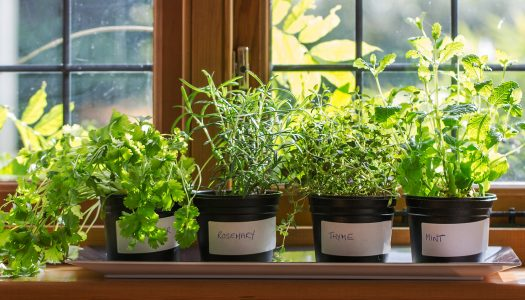 5 Useful Tips for Growing Fresh Herbs on Your Windowsill