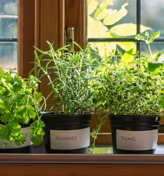 Grow-Fresh-Herbs-on-Windowsill