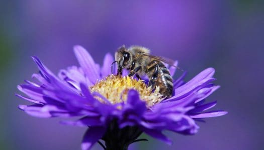 Bee Good to Your Garden this Spring with Container Gardening and Pollinators