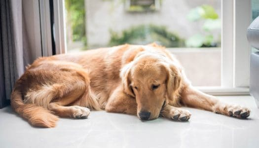 Understanding and Surviving the 7 Stages of Pet Loss Grief