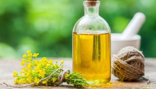 Healthy Brain Mystery: Is Canola Oil Bad for My Memory?